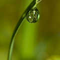 world in a drop  of dew